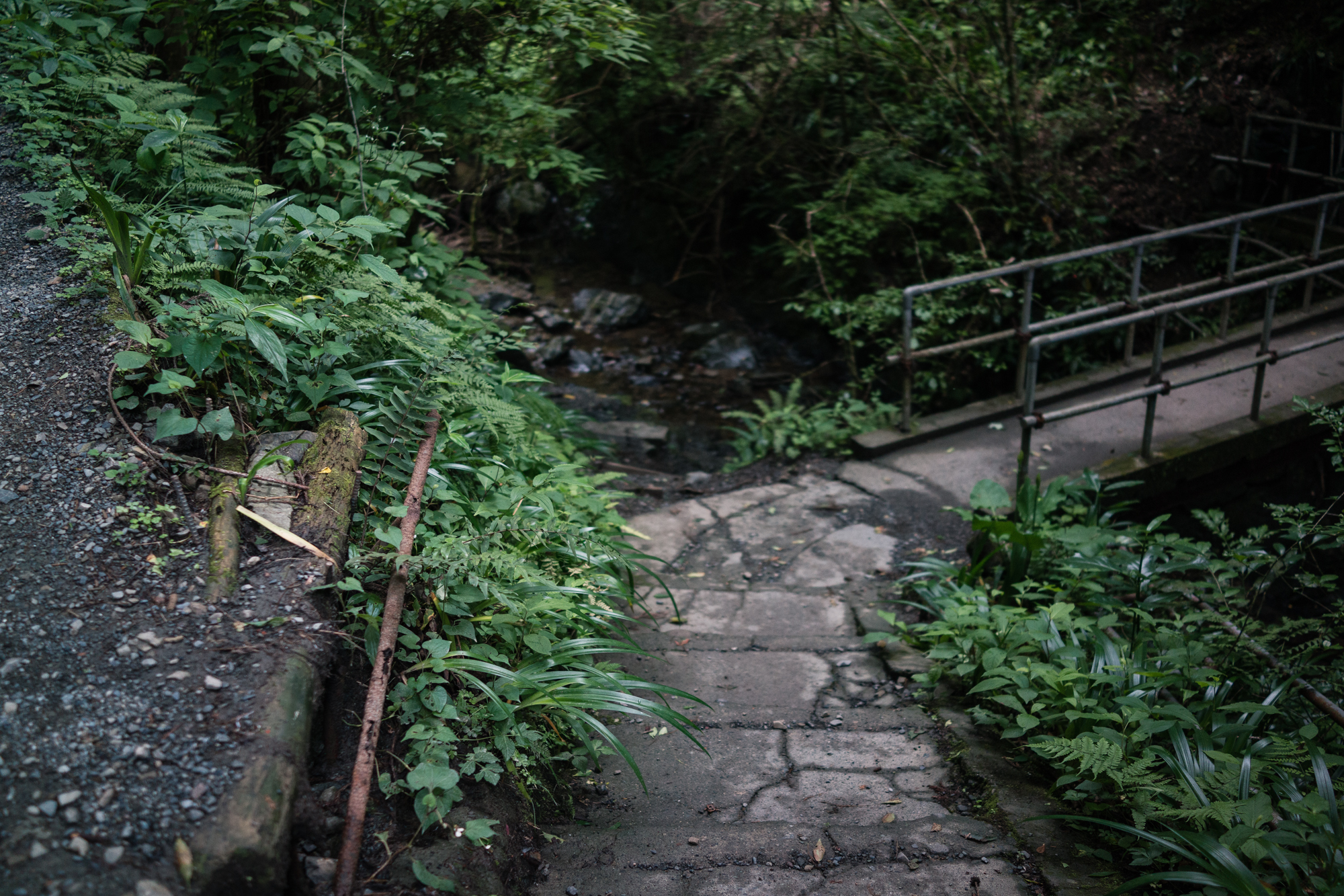 Bridges on Mt. Takao