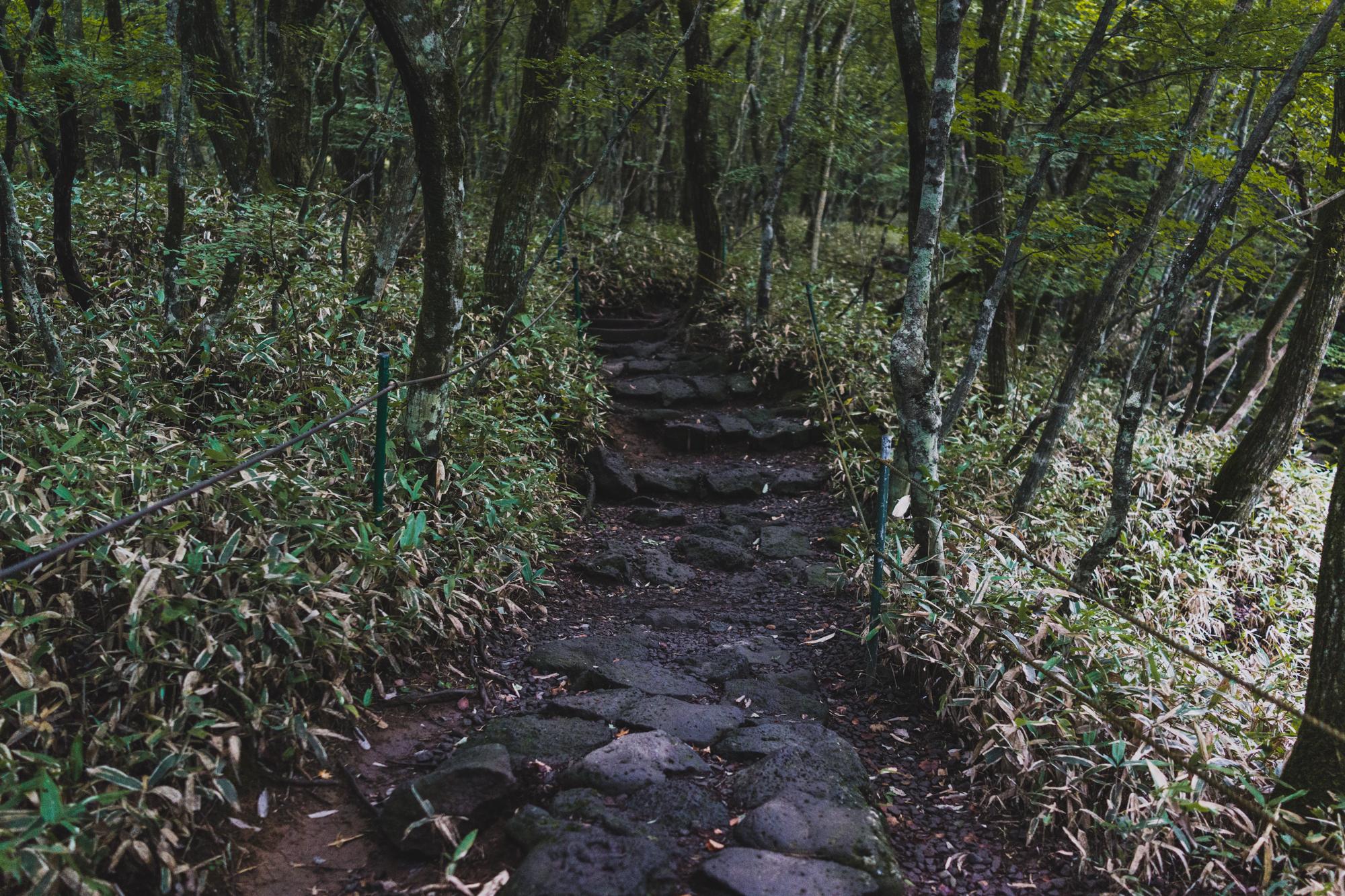 The Gwaneumsa Trail on Mt Hallasan Jeju Island