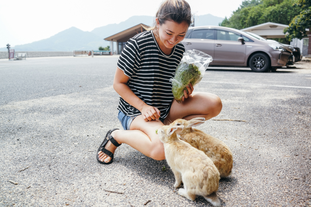 Feeding rabbits in Okunoshima over the summer